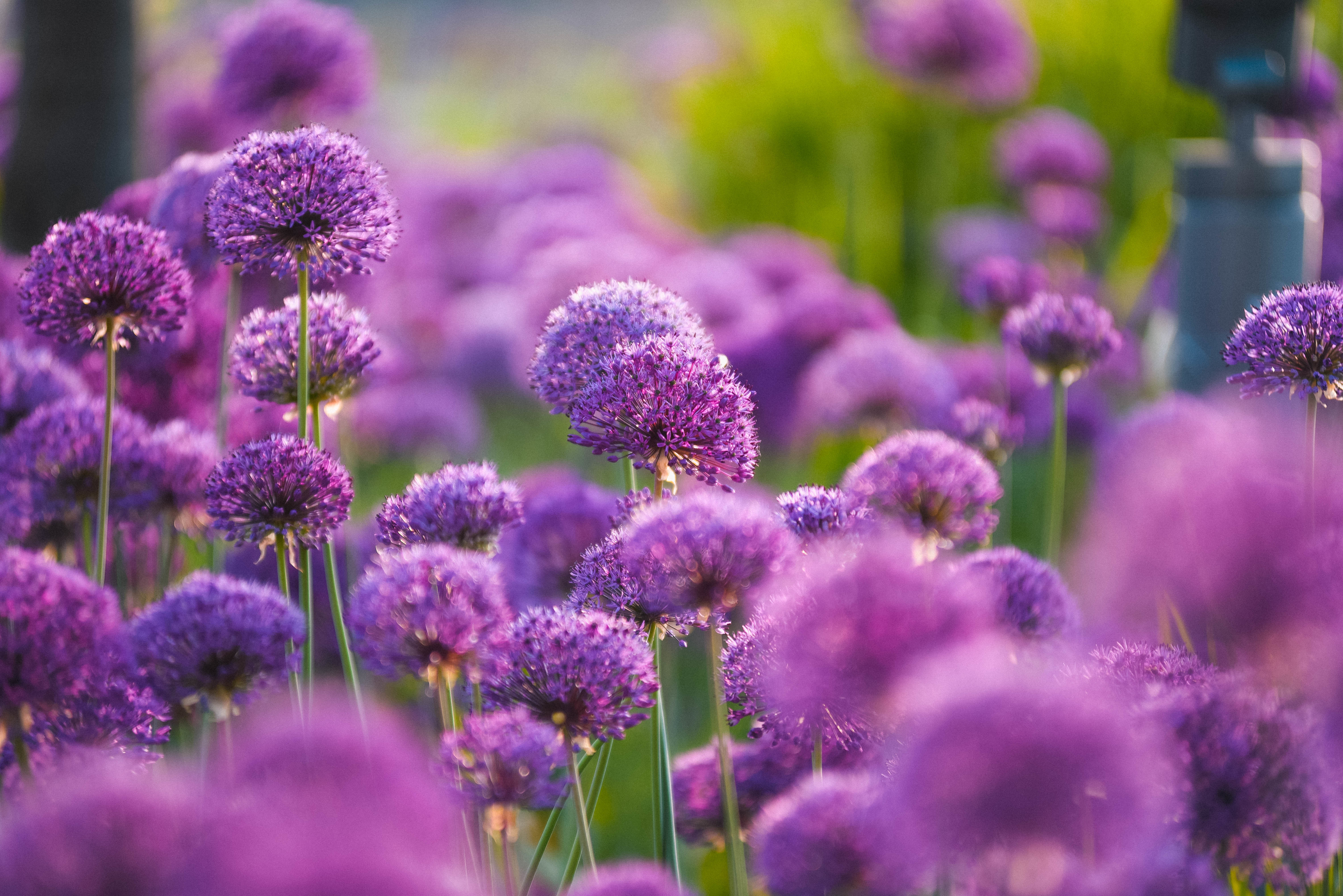 Park's flowers