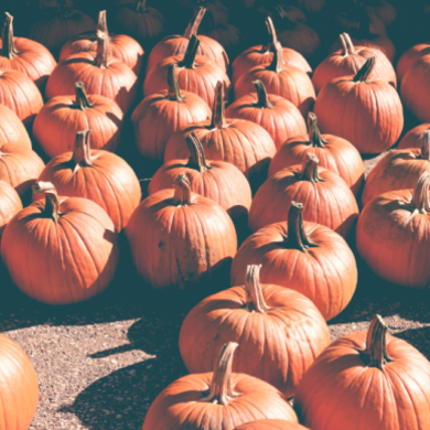 Осенний костюмариум в «Зелёной школе»