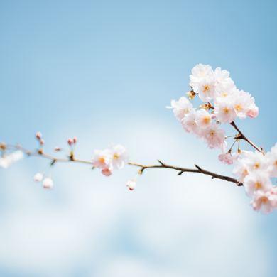 Весна идет! Новая музыкальная программа от творческого коллектива ART-COLLAGE