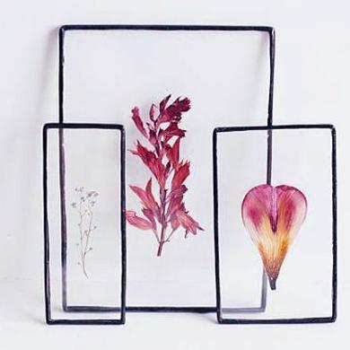 В Парке Горького научат делать гербарий в стекле