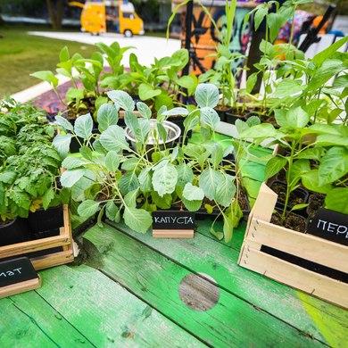 Стать фермером и вырастить урожай в центре Москвы