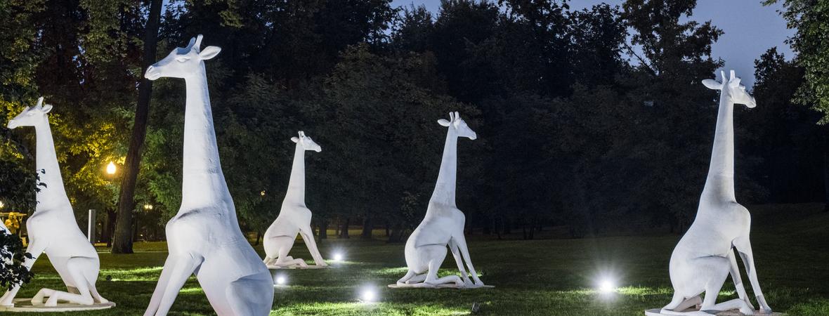 Жирафы Александра Повзнера